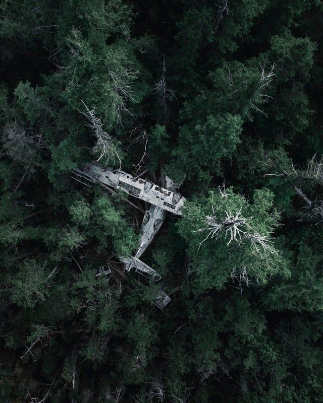 Abandoned airplane lost in the forest