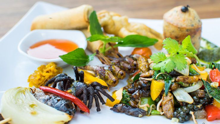 Gourmet Insects And Arachnids