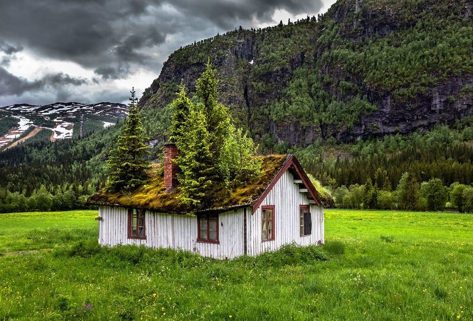 Tree Taking Over In Norway